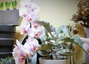 Composición con orquídeas