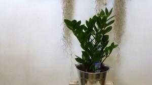Planta para interior