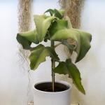 Planta de interiores