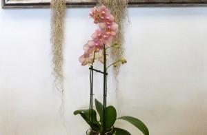 Orquídeas para interior