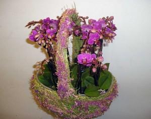 Centro de gerneras y orquídeas