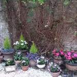 decoracion de patios con flores y plantas