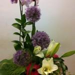 Centro de orquídeas y flores variadas
