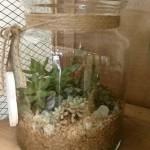 terrario de plantas